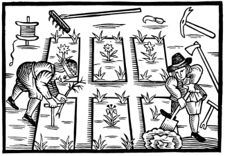 Thomas Hill planting beds 1590