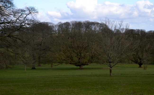 Tree shaping in the park