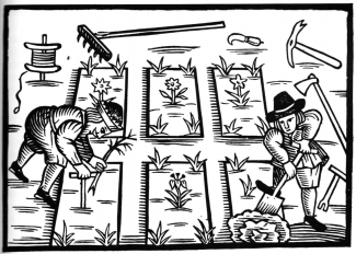 This woodcut illustration of planting taken from Thomas Hill's Gardener's Labyrinth (1577) demonstrates the use of the dibble. Illustrations such as this inspired the layout of the beds in the Elizabethan experimental garden at Trerice